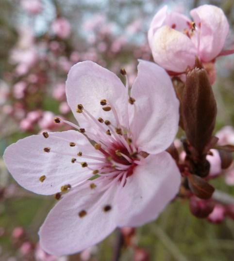 Die Frühlingsboten sind schon da