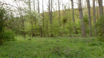 Der Wald er grünt so schön