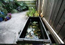 Stunning Backyard Aquarium Ideas 30