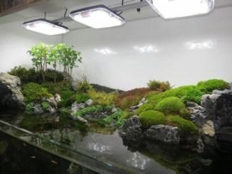 Stunning Backyard Aquarium Ideas 38