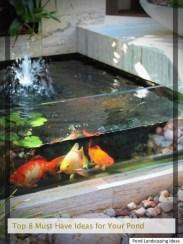 Stunning Backyard Aquarium Ideas 39