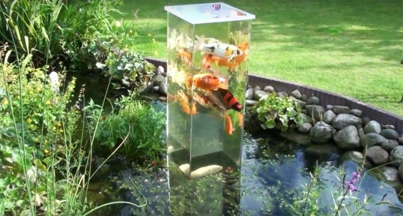 Stunning Backyard Aquarium Ideas 41