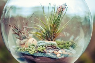 Fascinating Diy Terrariums Ideas To Try This Seasonl 07