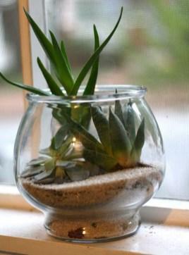 Fascinating Diy Terrariums Ideas To Try This Seasonl 20