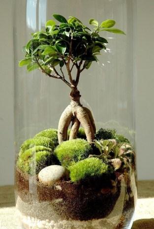 Fascinating Diy Terrariums Ideas To Try This Seasonl 29