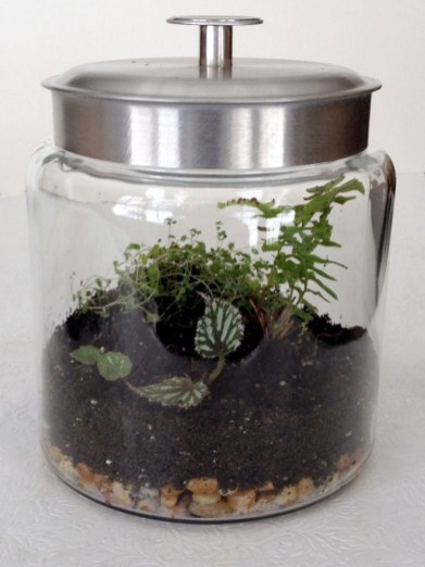 Fascinating Diy Terrariums Ideas To Try This Seasonl 32