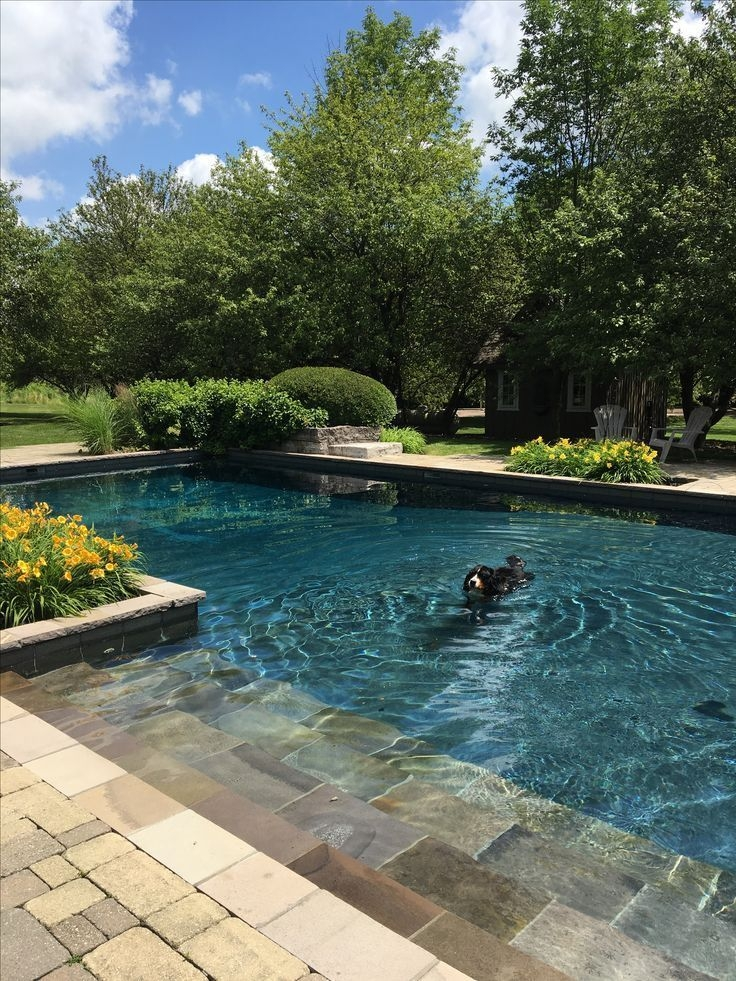 Affordable Backyard Pool Design Ideas To Try 28
