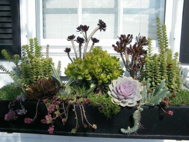 Unique Window Design Ideas With Plant That Make Your Home Cozy More 33