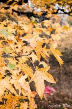 Enchanting Backyard Deck Ideas For Autumn To Try Asap 40