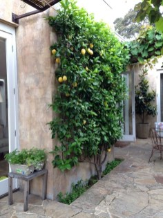 Rustic Small Backyard Design Ideas With Vertical Garden To Try Asap 04