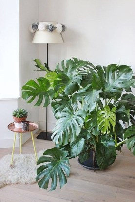 Brilliant Tropical Winter Decor Ideas That Bring Your Home Into Holiday Feel 16