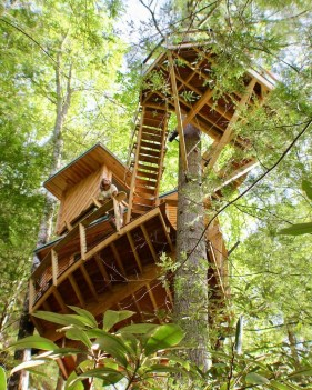 Spectacular Tree Ness House Design Ideas With Organic Architecture Inspired By Tree 26