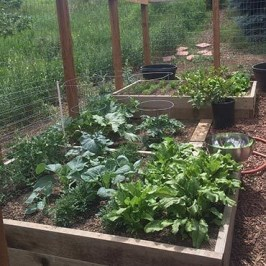 Rustic Vegetable Garden Design Ideas For Your Backyard Inspiration 04