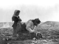 egypt-armenian-genocidet