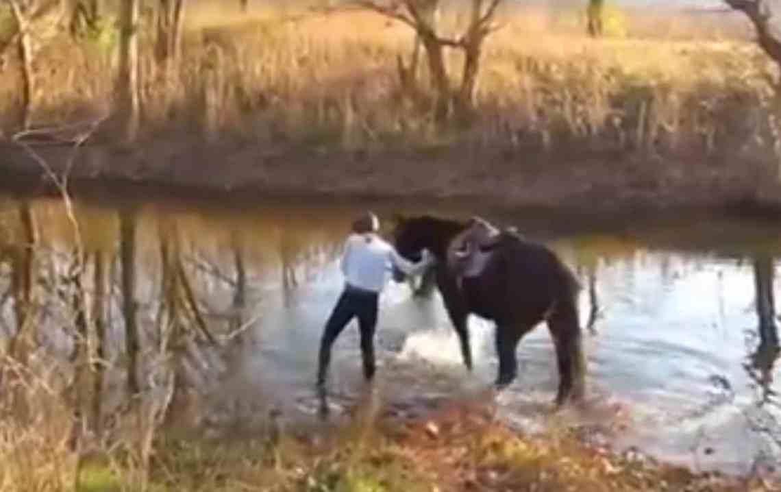 Un cheval qui avait peur de l'eau