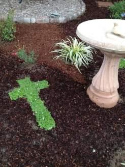 CrossWise in a garden