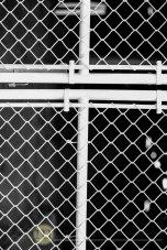 Melanie-Monroe-CrossWise-fence