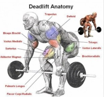 best exercise for building upper body