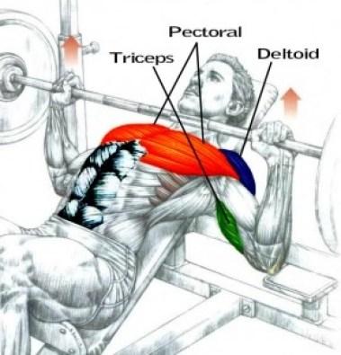best upper body exercise