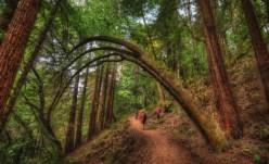 redwood-regional-park-110723