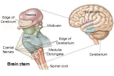 What Is Your Brain? | Renaissance Man Journal