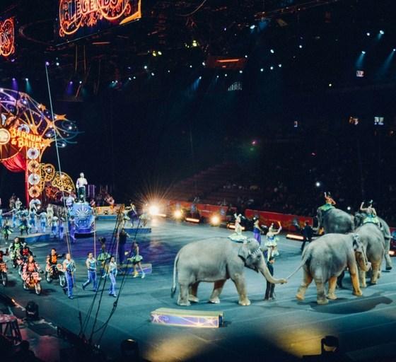 Za jakaś, nie dosyć inna - szlakiem piekielnych oczekiwań - zdjęcie z cyrku