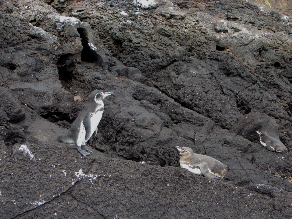 20090912_penguins_2