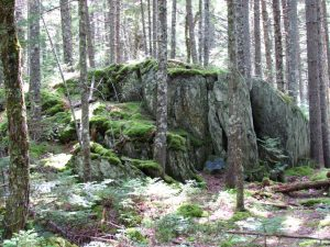 Huge boulder among trees in 100 Mile Wilderness in Northern Maine