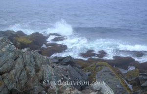 Small ocean surf on overcast day with rocky shore partially covered with gold seaweed.