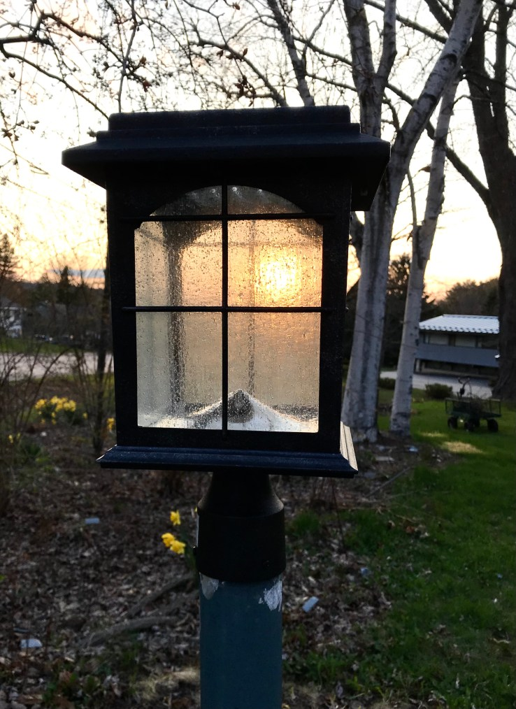 Solar Lamp Post Light with setting sun shining through its glass casing in barely green spring yard.