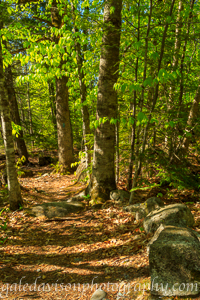 Sanders Loop Trail in May in the Kennebec Highlands in Maine.
