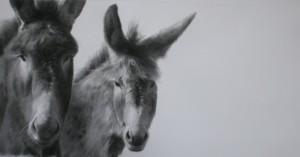 Pareja de burros-Carbón-50x101-Manuel Cano