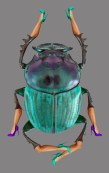 11-Escarabajo3a