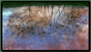 Première image de 'Flaque d'Eau '. Impression d'art éblouissante inspirée du monde fascinant que l'on peut observer dans une flaque d'eau, s'ouvrant sur le ciel. artiste : Anne Turlais - Edition limitée à 300 exemplaires. Imprimé sur papier Fine Art et encollé sur Dibond.