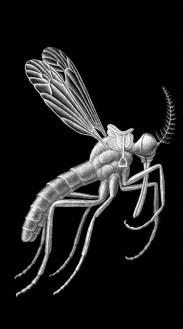 Comment les moustiques se répandirent sur le monde,carte à gratter, 30 x 17,5 cm