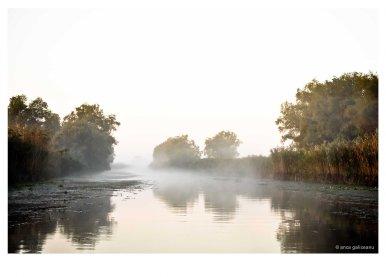 shades of fog-7