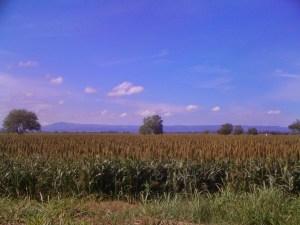 End of harvest 2013