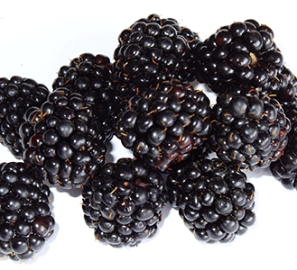 Blackberries_by_feiern1