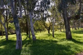 יער אילנות