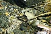 creek water reflections
