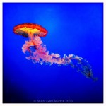 Jellyfish & Chinese Red Tea – Sharing Images on Instagram