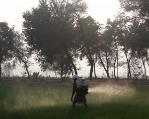 The Silent Fields – Pesticide Poisoning in Punjab