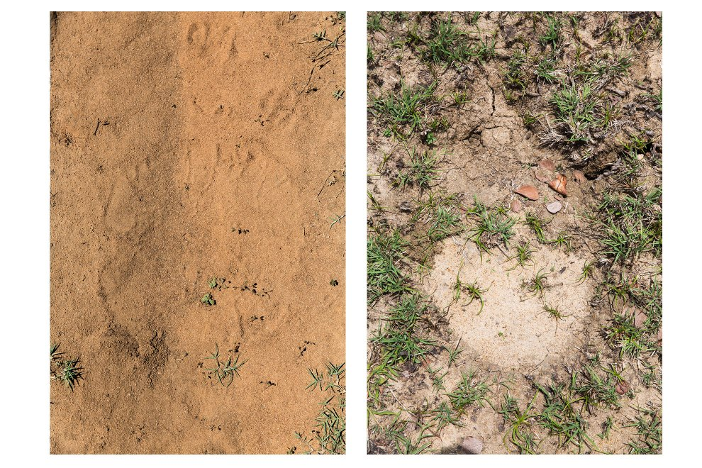 Wild elephant footprints in the Wasgamuwa National Park, spotted by park rangers monitoring and tracking the roaming populations.