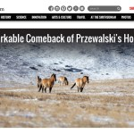 Mongolia's Wild Horses, for Smithsonian Magazine