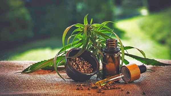 medical-marijuana-600