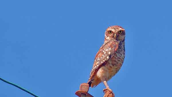 owl-miranda-600