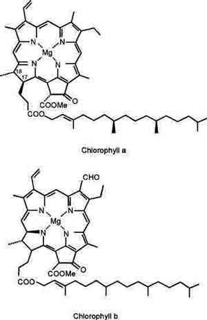 chlorophyll & CBD: legal from hemp.