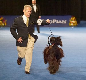 National Dog Show:  Dog Day Afternoon