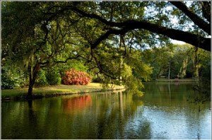 Beautiful pond and plantings.
