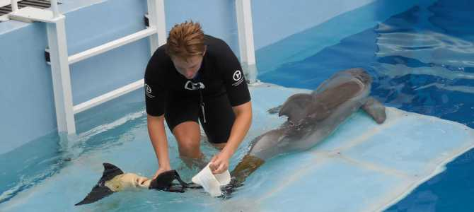 "Clearwater's ""neighborhood"" aquarium and its Hollywood star"